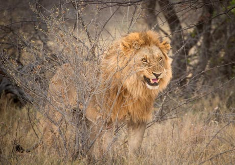 Namibian Savanna Wildlife