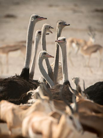 Ostrich Congress, Namibia Tour